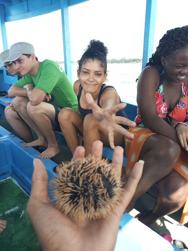 Glass boat tour half day trip