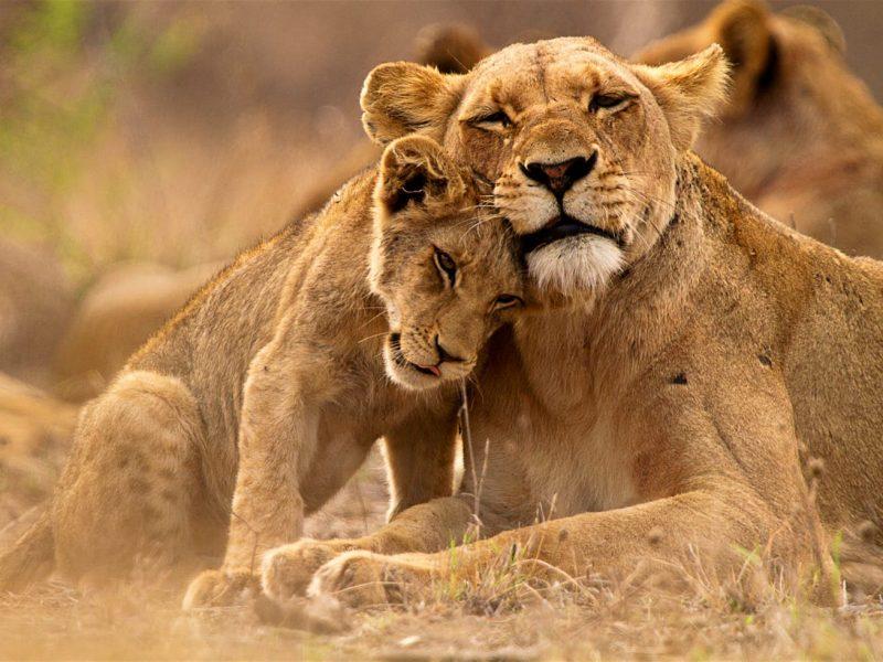 10 nights 11 days Southern Belle & Lower Zambezi National park